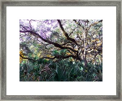 Live Oak Framed Print by Christy Usilton
