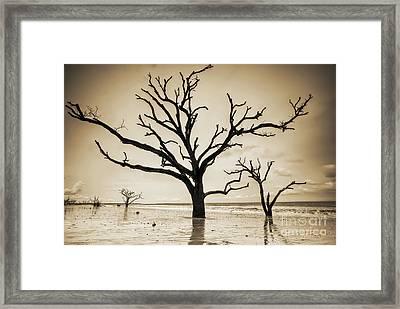 Live Oaks Of Botany Bay Beach Sc Sepia Framed Print by Dustin K Ryan