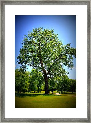Old Green Tree Framed Print