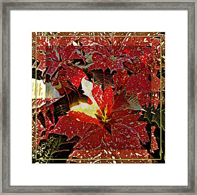 Living Light Of Poinsettias  Framed Print by Mindy Newman