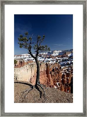 Living On The Edge Framed Print by Karen Lee Ensley