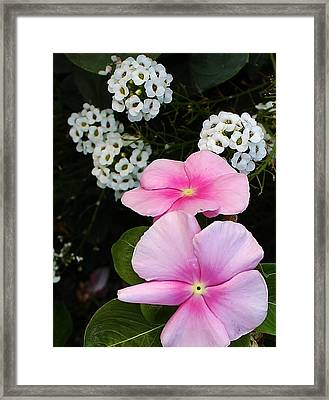 Living Side By Side Framed Print by Bruce Bley