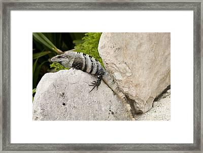 Lizard Framed Print by Blink Images