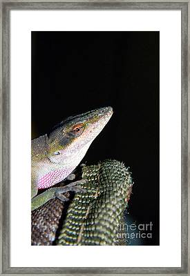 Framed Print featuring the photograph Lizard by Ester  Rogers