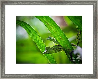 Lizard Framed Print by Gualtiero Boffi