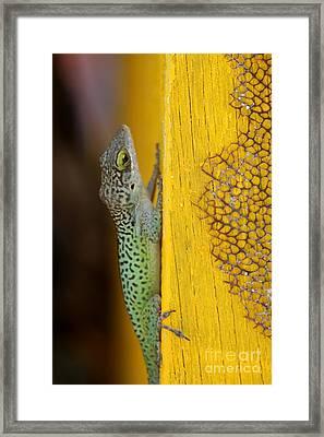 Lizard Framed Print by Sophie Vigneault