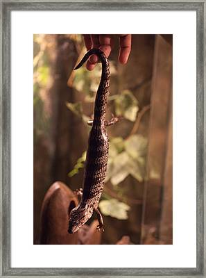 Lizard Tail Framed Print by Carole Hinding