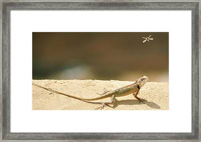 Lizards Framed Print by Shahzeb Nasir