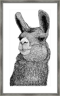 Llama Framed Print by Drawings & Artwork by Karl Addison