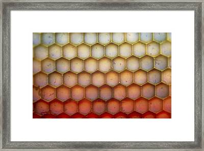 Lm Of The Facets Of A Dragonfly's Compound Eye Framed Print by John Walsh