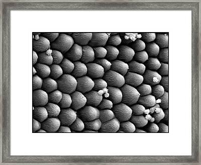 Ln2 Petal Framed Print by Sheri  Neva