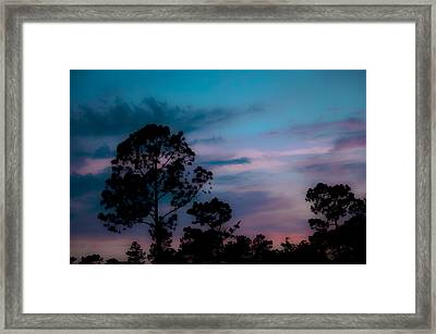 Loblelly Pine Silhouette Framed Print by DigiArt Diaries by Vicky B Fuller