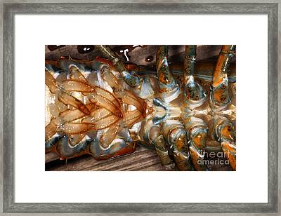 Lobster Female Sex Organs Framed Print by Ted Kinsman