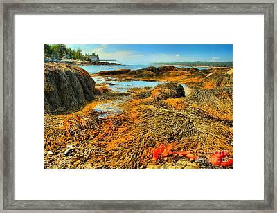 Lobster Stew Framed Print by Adam Jewell