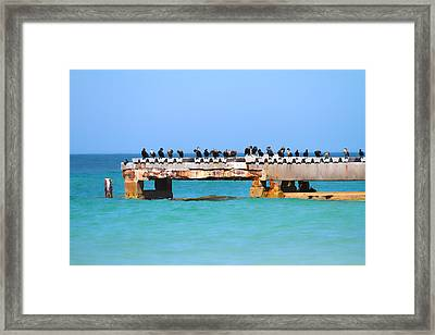 Local Hangout Framed Print by Betsy Knapp