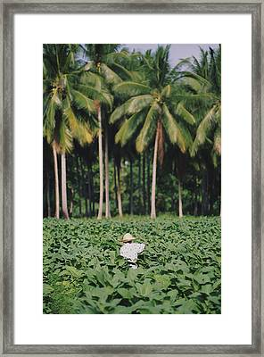 Local Man Spraying Tobacco Crop Framed Print by Axiom Photographic