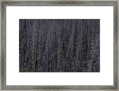 Lodgepole Snags Verge On Collapse Framed Print