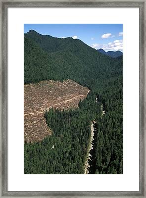 Logging Framed Print