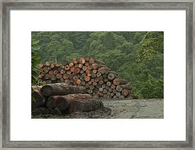 Logging Of Native Rainforest, Ecuador Framed Print