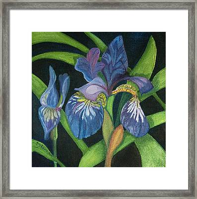Lois' Iris Framed Print by Amy Reisland-Speer