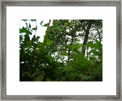 Loking Up At The World Framed Print by Brityn Klehr