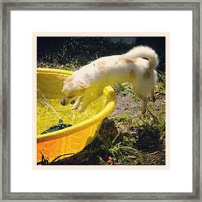 #lol #funny #dogs Framed Print