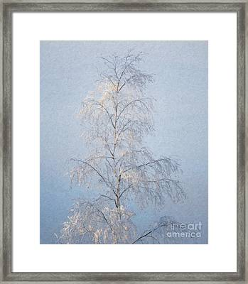 Lone And Slender Framed Print by Ari Salmela