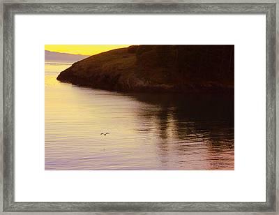 Lone Bird At Rosario Beach Point Framed Print by Randall Thomas Stone