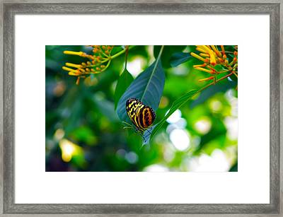 Lone Butterfly Framed Print by Michael Krahl