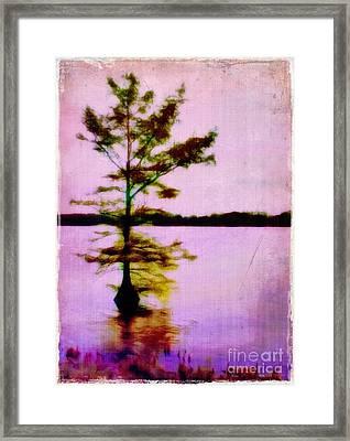 Lone Cypress Framed Print by Judi Bagwell