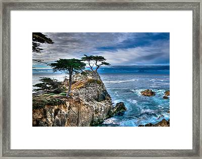 Lone Cypress Morning Framed Print