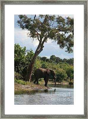 Lone Elephant Water Hole Framed Print by Carol Wright
