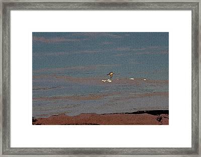 Lone Gull  Framed Print by Gilbert Artiaga