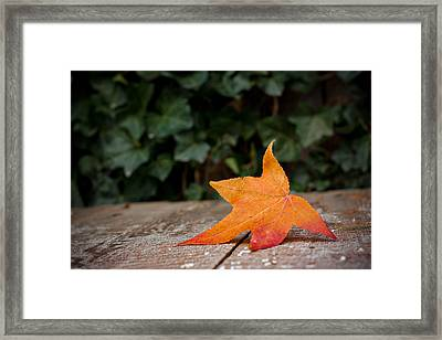 Lone Leaf Framed Print