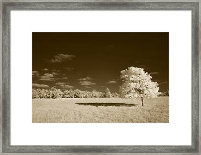 Lone Maple Framed Print