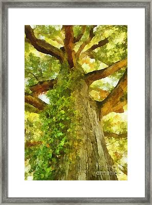 Lone Oak 01 Framed Print