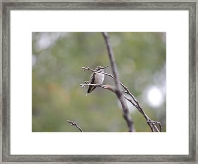 Lone October Hummingbird Framed Print