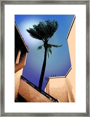 Lone Palm Framed Print by Ginny Schmidt