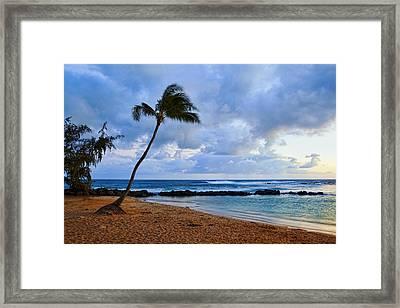 Lone Palm Framed Print by Kelley King