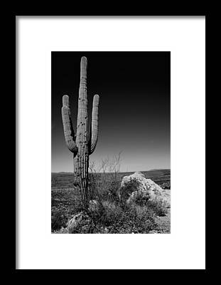 Cacti Framed Prints