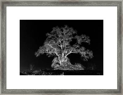 Framed Print featuring the photograph Lone Tree 002 by George Bostian