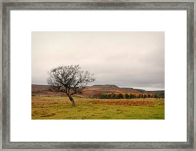 Lone Tree And Higger Tor Framed Print by Siobhan Brennan-Raymond