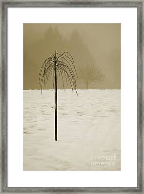 Lone Tree And Winter Landscape Framed Print