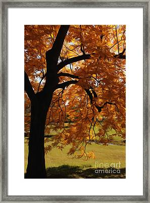 Framed Print featuring the photograph Lone Tree by Anne Raczkowski