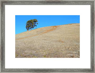 Lone Tree At Coyote Hills California . 7d10906 Framed Print by Wingsdomain Art and Photography