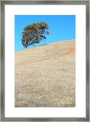 Lone Tree At Coyote Hills California . 7d10908 Framed Print by Wingsdomain Art and Photography