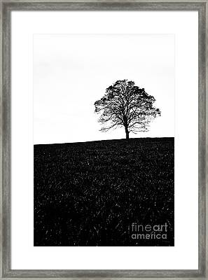 Lone Tree Black And White Silhouette Framed Print