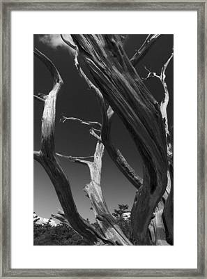Framed Print featuring the photograph Lone Tree by David Gleeson