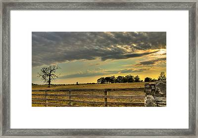 Lone Tree In Pasture Framed Print by Brandon Smith
