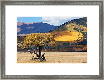 Framed Print featuring the photograph Lone Tree by Jim Garrison